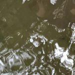 モンテッソーリ文化教育:オタマジャクシの飼育・その1