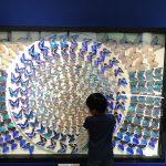 日常のモンテッソーリ【文化教育】秋の蝶々~シジミチョウ